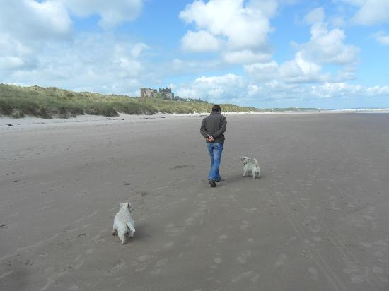 Springwood: Walking on beach to Bamburgh with dogs