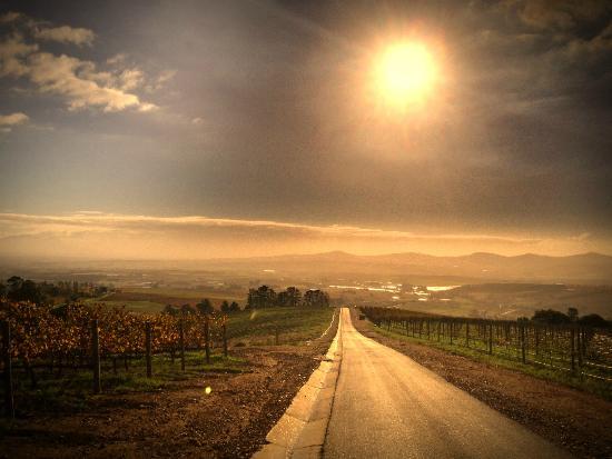Uva Mira Mountain Vineyards: Landscape View
