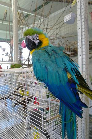 World Parrot Refuge: June 6/2012 Amanda MacArthur
