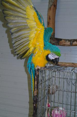 World Parrot Refuge: June 6/2012 Amanda MacArthur