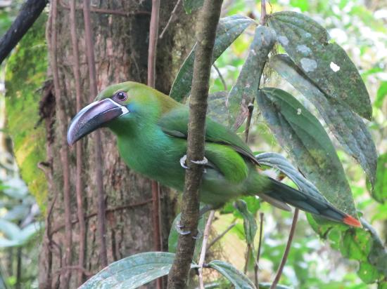 Casa Divina Lodge: toucanette