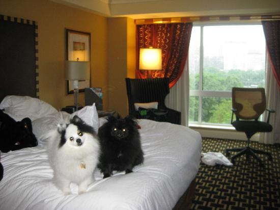 Kimpton Hotel Marlowe: Domino and Kit Kat at Hotel Marlowe