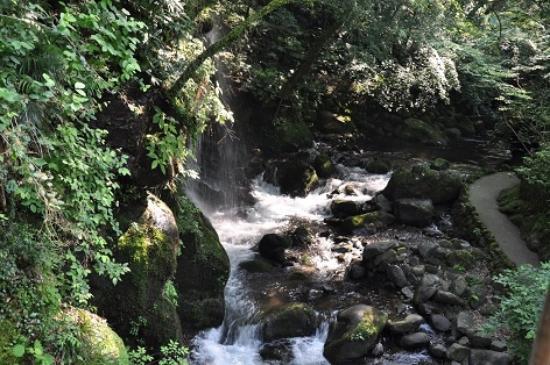 Yugawara-machi, Japan: 万葉公園の渓流