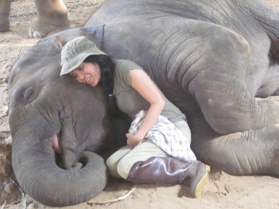 Elephant Nature Park: Lek singing the baby elephant a lullaby