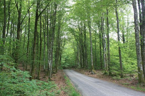 Möckelsnäs Herrgard: The road to the hotel