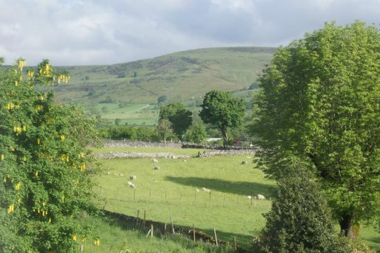 Hillside House: View from the bedroom window (sheep everywhere - loved it!)