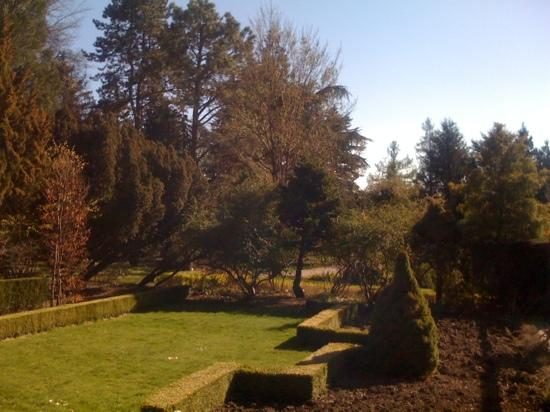 Botanical Garden: some of the high trees there