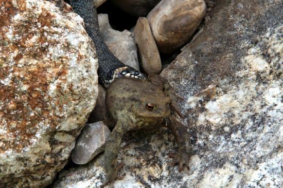 RelaxResort Kothmuehle : Schlange mit Frosch