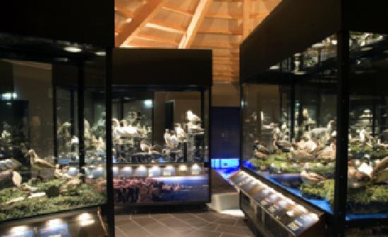 Sigurgeirs Bird Museum