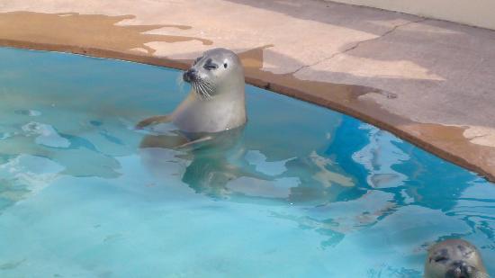 Nature land seal sanctuary skegness webcam