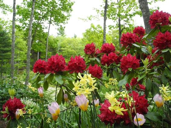 Coastal Maine Botanical Gardens: Reds and Yellows