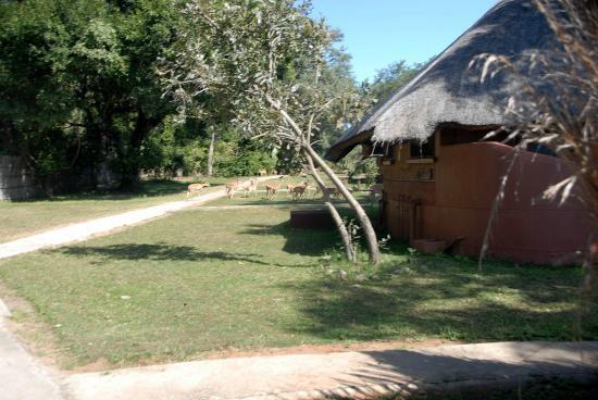 Mushroom Lodge: Hippo on the premises