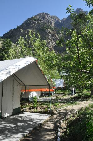 Apple Orchard Farm and Camping : Outside of the camp