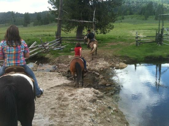 4D Longhorn Guest Ranch : Trail ride...