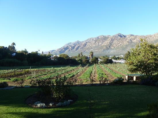 ‪‪Montagu Vines Guesthouse‬: The view‬
