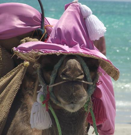 Hasdrubal Thalassa & Spa Djerba: vous allez le croiser en vous promenant le long de la plage