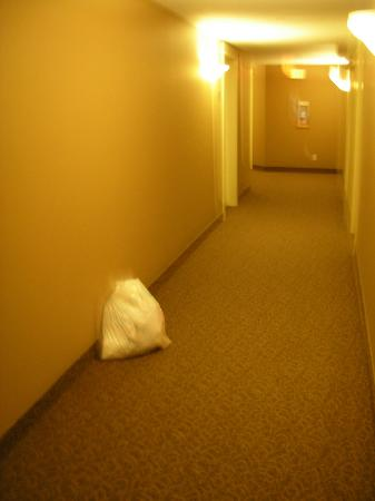 Borgata Lodge Hotel: Garbage sat in hallway for two days.