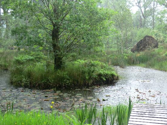 Ardkinglas Woodland Garden: The pond is even beautiful in the rain