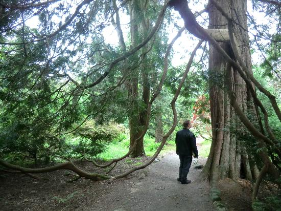 Ardkinglas Woodland Garden: Quite a surreal atmosphere under the trees