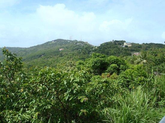View east along Ridge Road