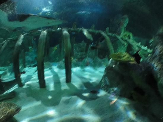 SEA LIFE Grapevine : Cool tanks!