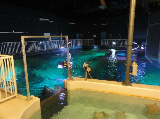 SEA LIFE Grapevine : Behind the scenes tour