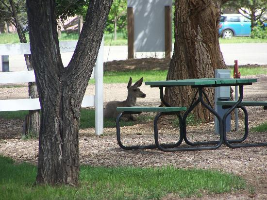 Lucy's RV Park: Resident deer relaxing at Lucy's Place