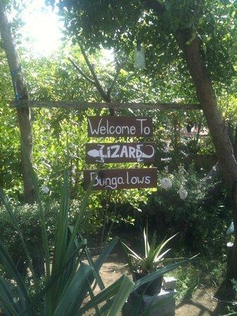 Photo of Lizard Lombok
