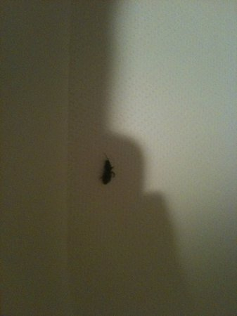 Econo Lodge: another bug in shower