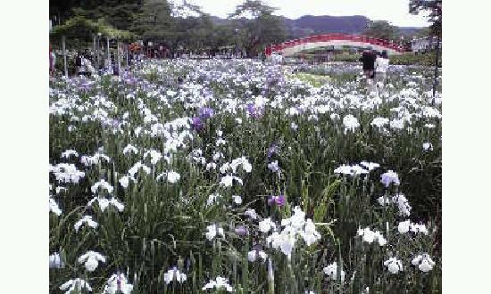 Toyohashi, Japonya: 2012.6.9