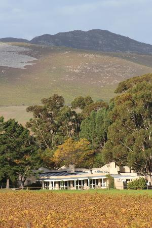 Blue Gum Country Estate: View of the guesthouse and surrounds