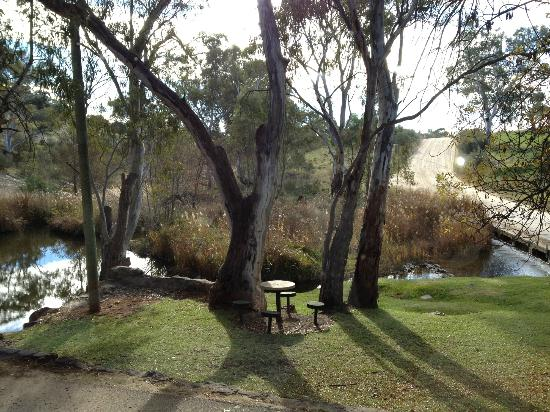 Cafe Y: View from inside-looking over the creek