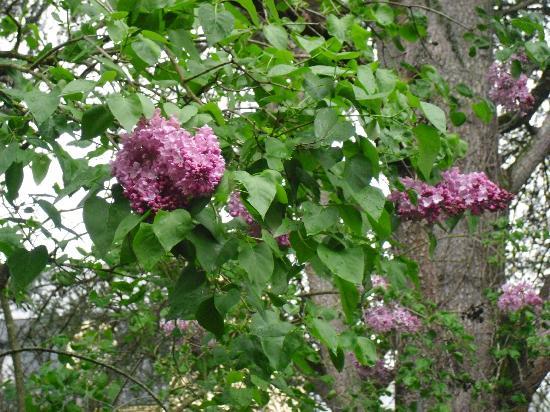 Le Jardin Sarlat: Pretty garden