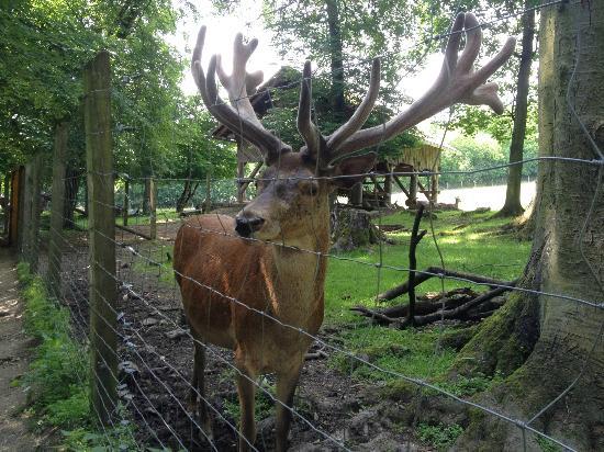 Tier- und Pflanzenpark Fasanerie : Deer