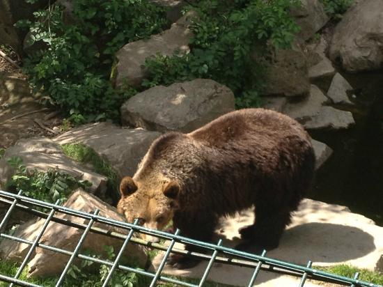 Tier- und Pflanzenpark Fasanerie : Bear