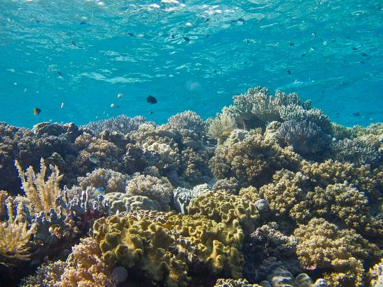 Wakatobi Dive Resort: A typical reef scene.