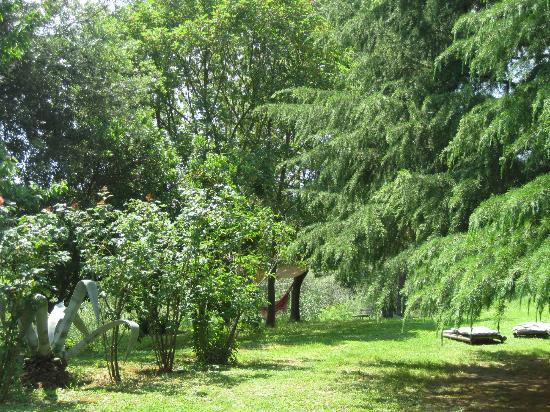 Agriturismo Bethsaid: Üppiges Grün