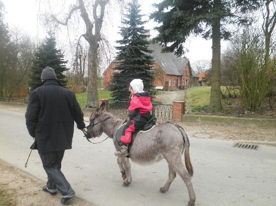 Esel- und Landspielhof: som kan lejes som ridedyr eller foran vogn.