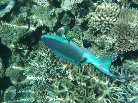 Angsana Ihuru : poissons