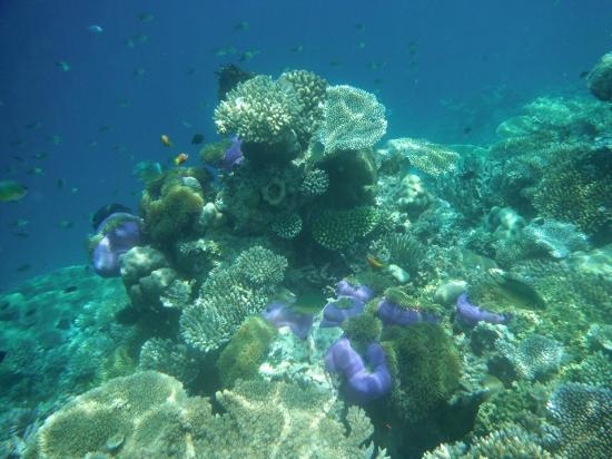 Angsana Ihuru : reef
