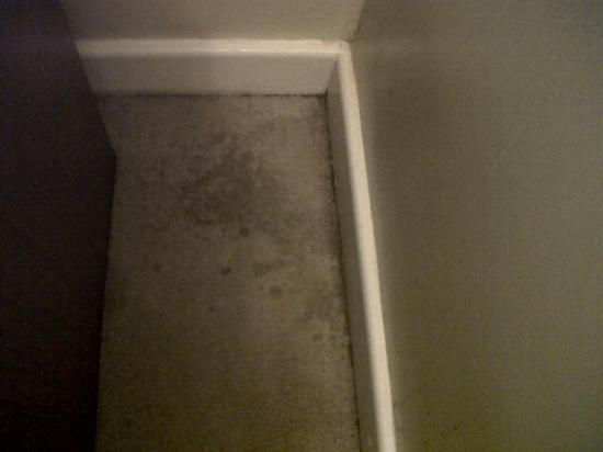 The Lansdowne Hotel: Filthy stained carpet