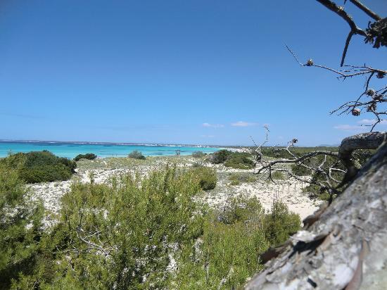 Playa de Es Trenc: panorama da dietro la spiaggia
