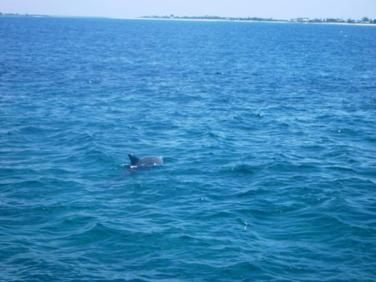 Club Med Turkoise, Turks & Caicos: Jojo the dolphin!!