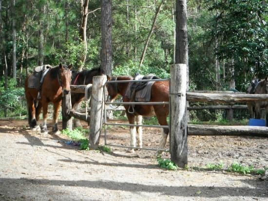 Mooloolah Valley Holiday Houses: Riding Centre