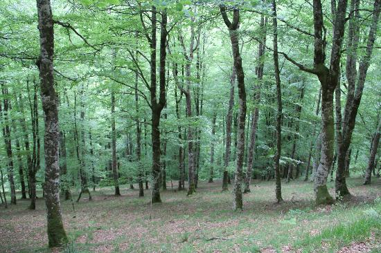 Selva de Irati: El segundo mayor hayedo de Europa
