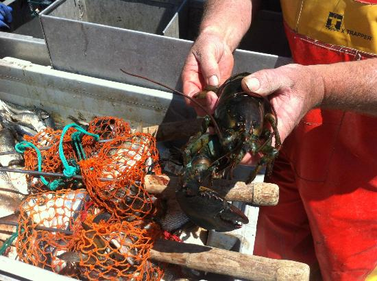 Lobster Boat Tour w/ Captain Clive Farrin : Learn from a teacher