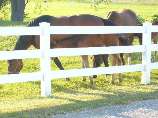 Charm Countryview Inn : Horses and foals in front of the inn