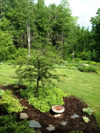 Willey's Farm Bed & Breakfast: back yard