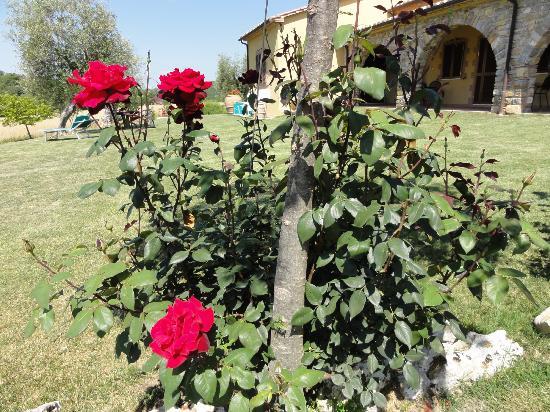 Agriturismo Pian di Cataverna: Una delle tante piante di rosa