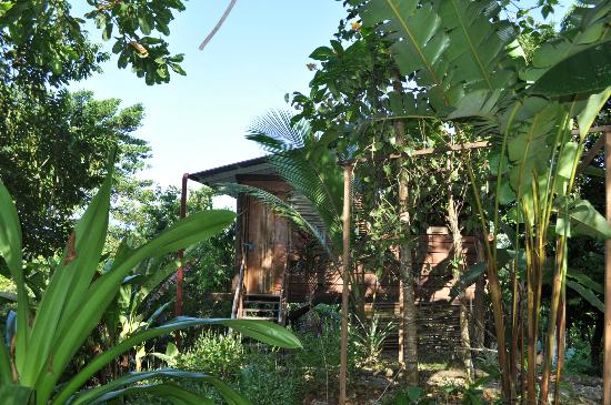 La Loma Jungle Lodge and Chocolate Farm: Cabin #3